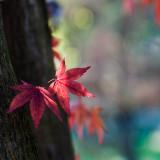gallery : Leaves