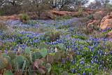 Bluebonnet Ravine