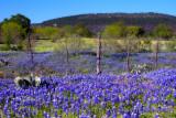 Wildflower Prairie