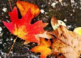 Fall on Rock 2005
