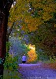 Fall Walk Home