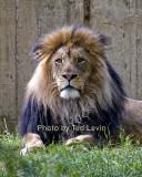 DC_Lion_13.jpg