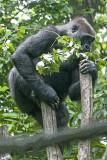 Congo BX Zoo_20.jpg