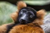 bronx zoo 10-11_26.jpg