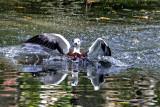 bronx zoo 10-11_06.jpg