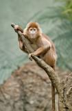 Monkey_130.jpg