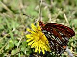 beach butterfly.jpg