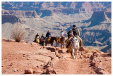 Mule train on the South Kaibab trail