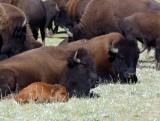 603 GCNR Rt 67 Buffalo 4.jpg