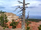 181 Bryce Canyon Scenic Drive 5.jpg