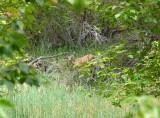 267 Calf Creek Falls hike 21.jpg