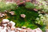 397 Zion Emerald Pools 27.jpg