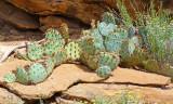 701 Mesa Verde cactus.jpg