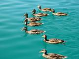 304 Lake Bled.jpg