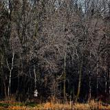 L'enfant de la forêt