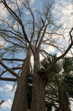 City Park Trees