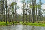 Green Bayou LaBranche