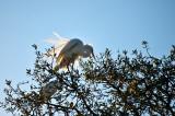 White Egret In The Sun