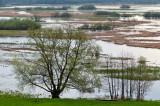 Biebrza Wetlands