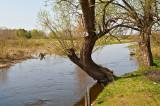 Biebrza River