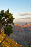 The Grand Canyon - North Rim