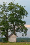 Little Shrine Under Big Tree