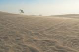 Sandstorm In Mesquite Dunes