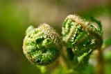Spring Green Balls