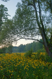 Fields Of Green And Yellow