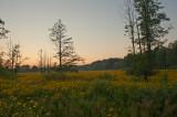 Sunset Full Of Flowers