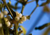 Hangin' 'Round the Mistletoe