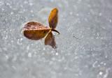 Ice-caught