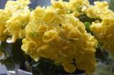 Ranunculus @f5.6 NEX5