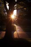 Morning sun @f8? RDPIII