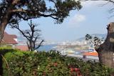 Winter camelia & Nagasaki bay