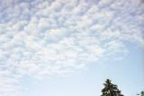 Cloud Reala