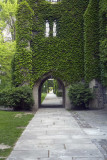 Vined gate @f8 5D