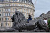 Lion of Trafalgar Square