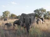 Selinda Reserve - Botswana