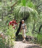 Common Black Boy, or Grass Tree  (Xanthorrhoea preissii)