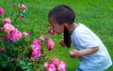 the_flower_garden