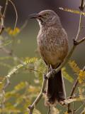 Vogels VS - Birds USA