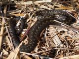 Slangen / Snakes
