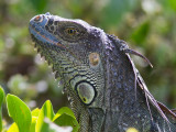 Hagedissen / Lizards