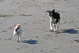 Lekker rennen op het strand