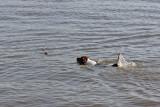 Spike zwemt voor de eerste keer