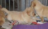 moegespeelde puppy