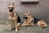 Kyra en Tosca