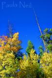 Autumn Sierras_1