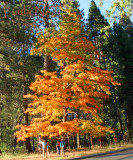 Valley Tree 2